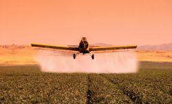 BigThumbnail - Pesticides et santé: le danger est réel !